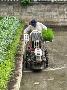 箕輪町3丁目で行われた田植えの様子(6月5日、飯山清志さん撮影・提供)