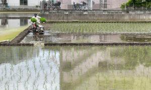 箕輪町の「季節の風物詩」を目に焼き付けようと、多くの見学者が訪れていた(同撮影・提供)