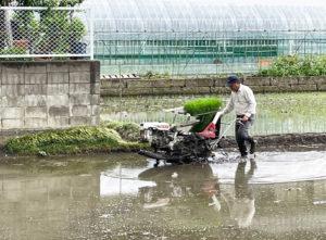 小型の田植え機を巧みに操る小嶋さん(6月5日、同撮影・提供)